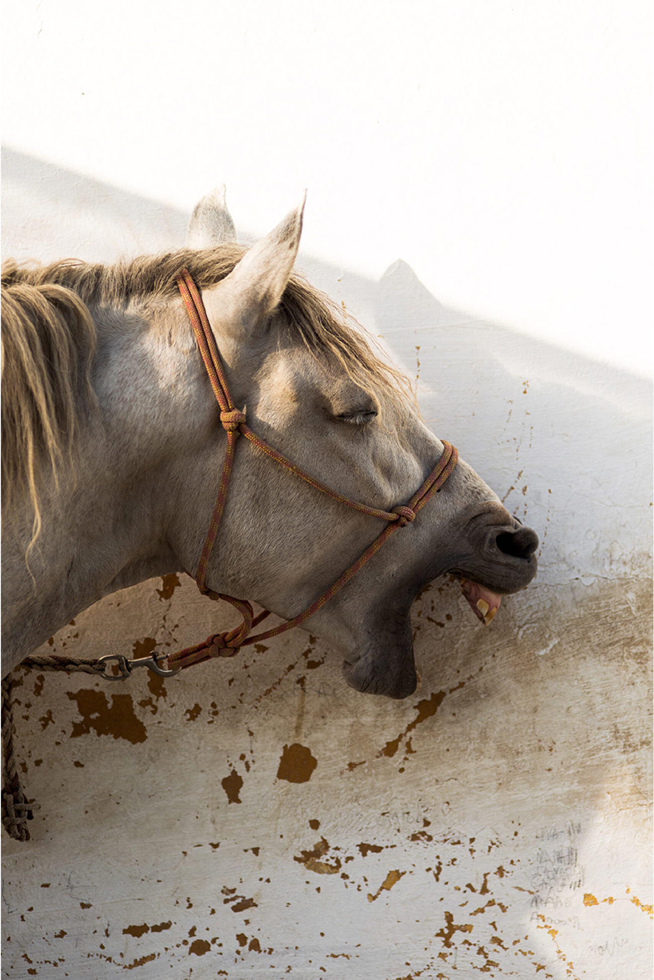 immagine_cavallo_verticali_sito-04-scaled-1